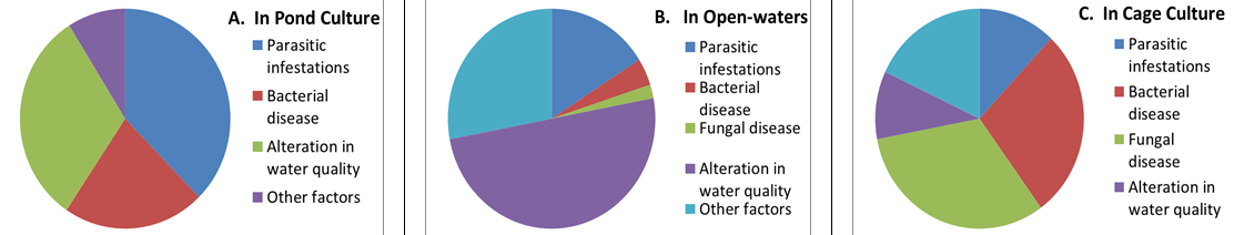 Figure 2 (A-C): Showing variable disease patterns in cultured fish in different freshwater aquaculture systems, A.) Pond culture, B.) Open-water culture, and C.) Cage culture systems, in India.