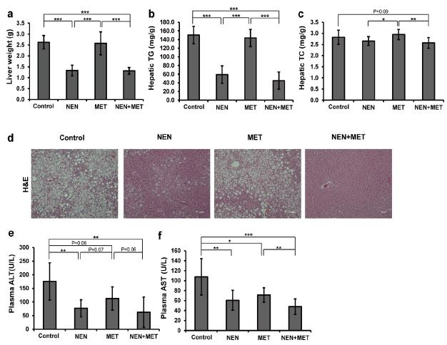 Effects of NEN and metformin in controlling hepatic steatosis and liver damage in mice