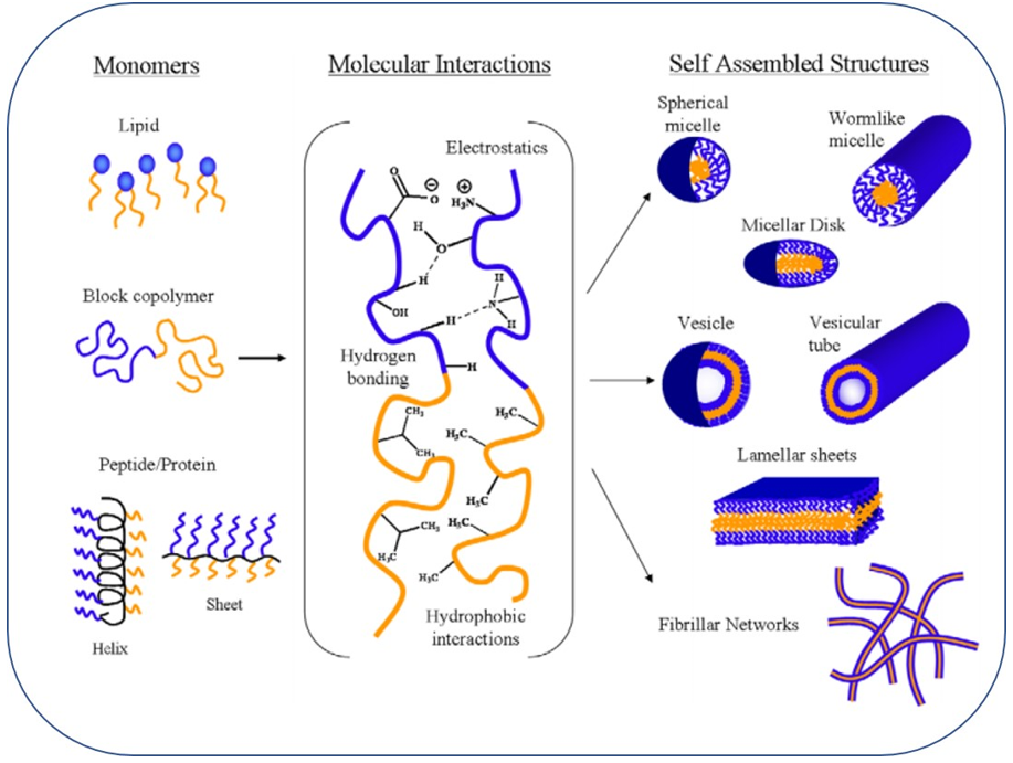 Figure 1: Illustration of self-assembly established by hydrophobic associations and polar interactions. Blue - hydrophilic portions; Orange - hydrophobic regions [11].