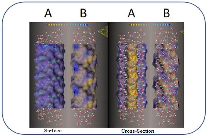 Figure 2: Molecular lipophilic patterns for starch single helix V-type (A) and double helices (B).