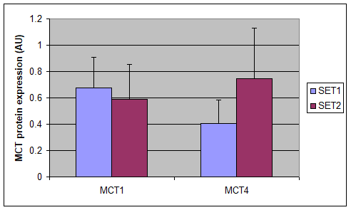 Representative blots of MCT1 and MCT4.