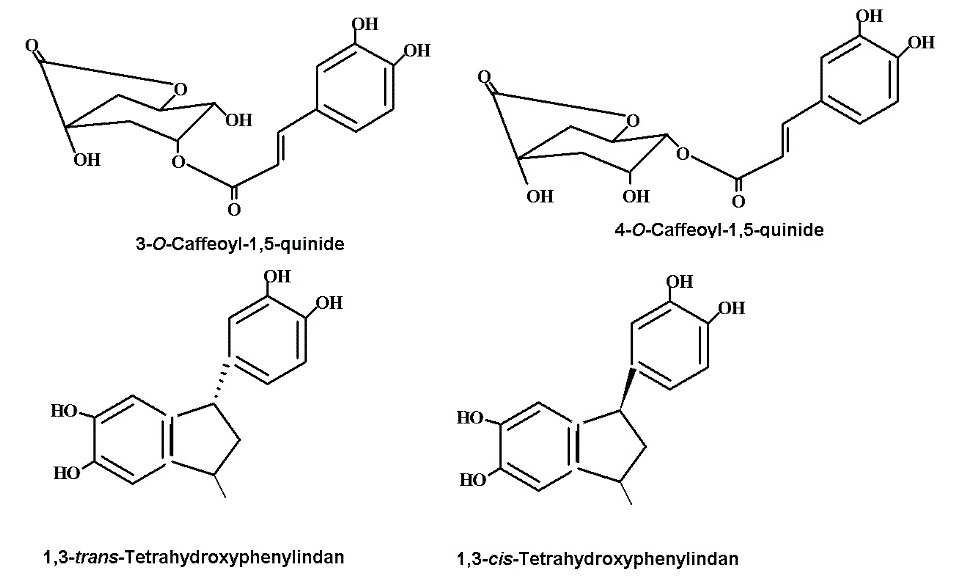 Chlorogenic acid derivatives obtained in coffee beans following the roasting process.