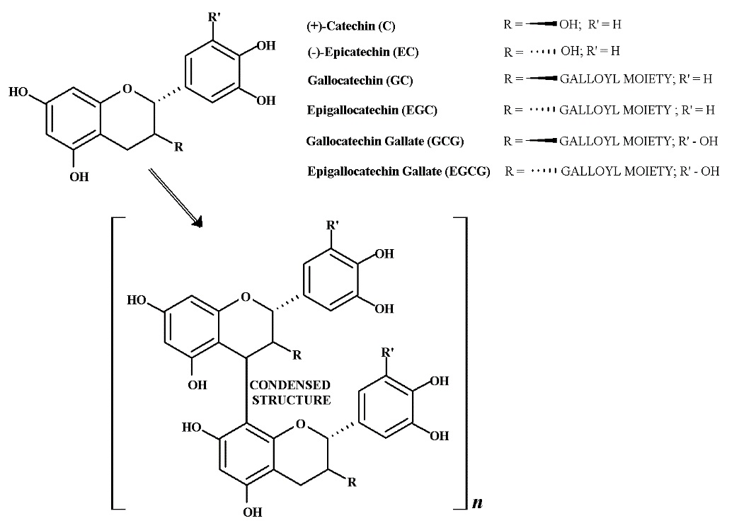 Structure of some major hydroxycinnamic acids detected in fresh coffee leaves.