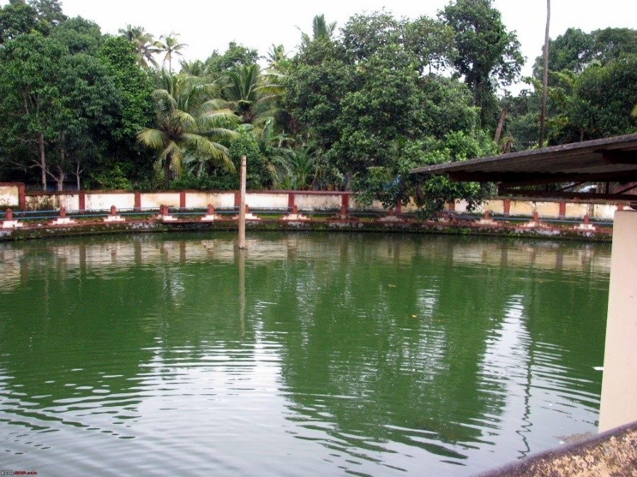 A temple pond, traditional water harvesting structure in Kerala